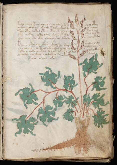 Une page du manuscrit de Voynich. Image : General Collection, Beinecke Rare Book and Manuscript Library, Yale University